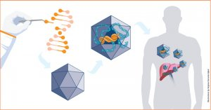 uniQure leverages adeno-associated virus (AAV) to deliver gene therapy